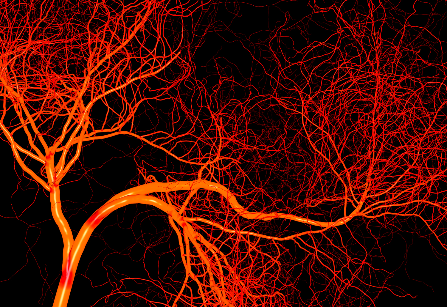 Blood Vessels The Franklin Institute