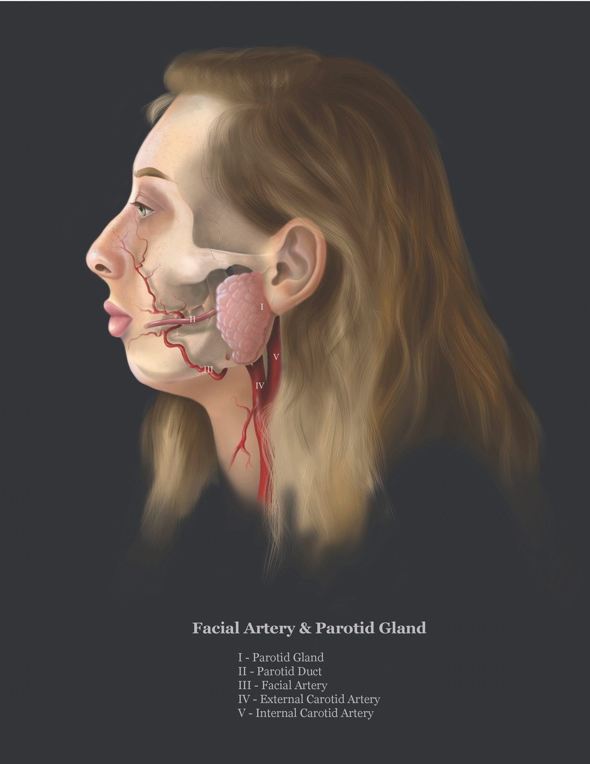 Scientific Illustration by Julia Lunavictoria of a self portrait depicting internal face anatomy with arteries