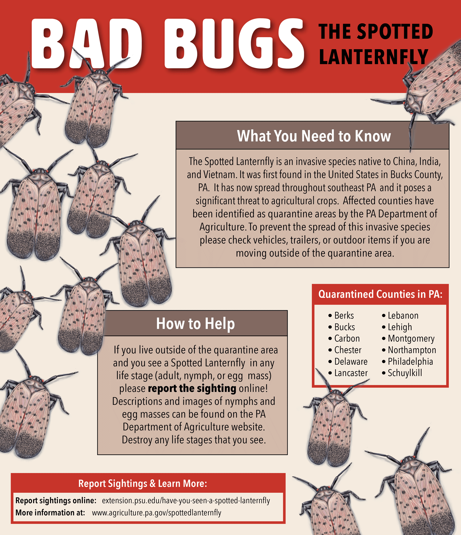 Educational poster on the invasive Spotted Lanternfly species by Kara Perilli