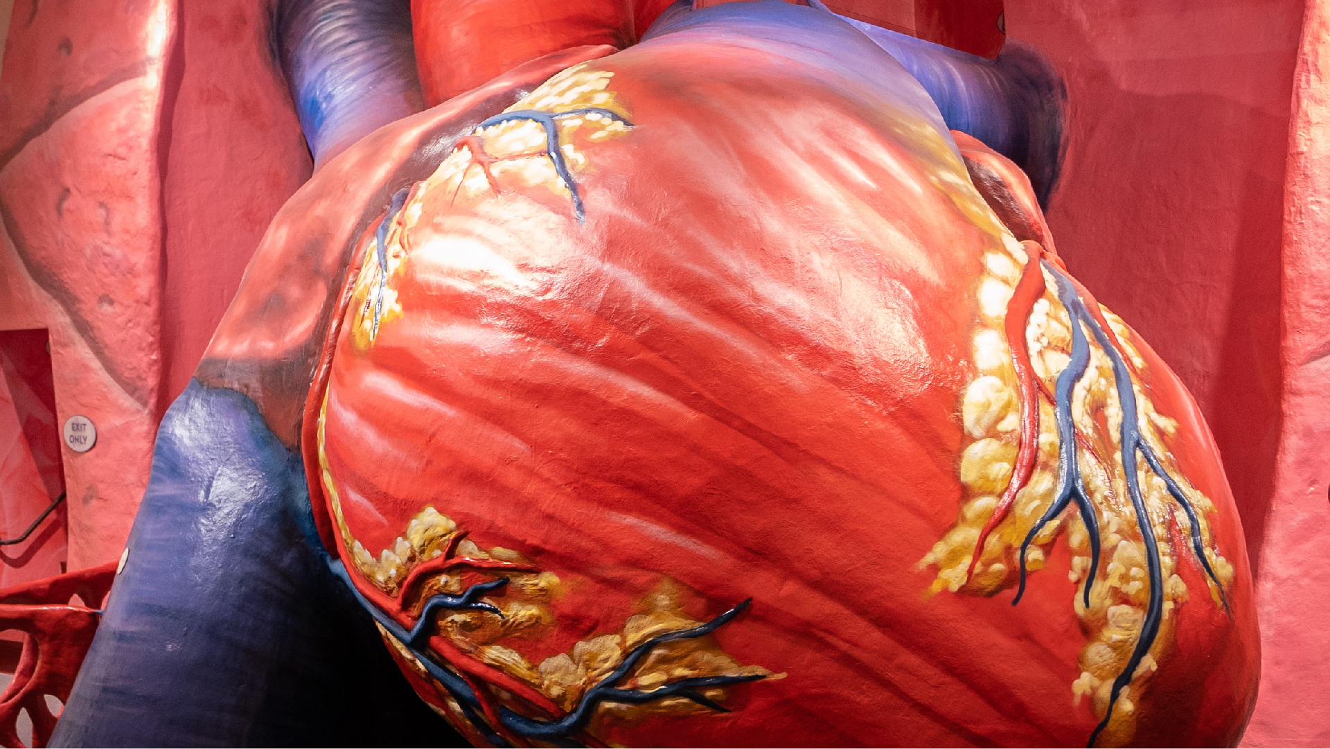 The Franklin Institute Giant Heart
