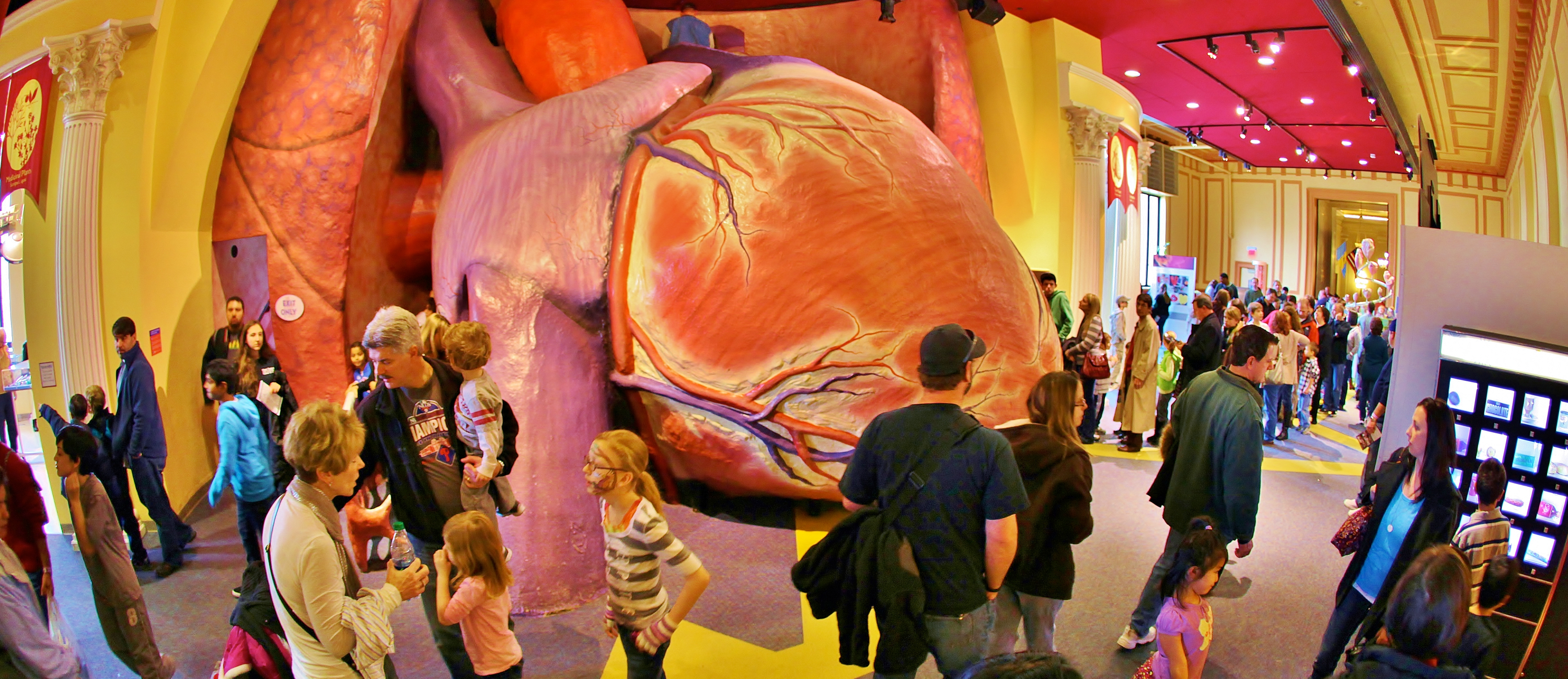 The Giant Heart The Franklin Institute Science Museum : HeroExhibitGiantHeart3 from www.fi.edu size 3000 x 1300 jpeg 2975kB