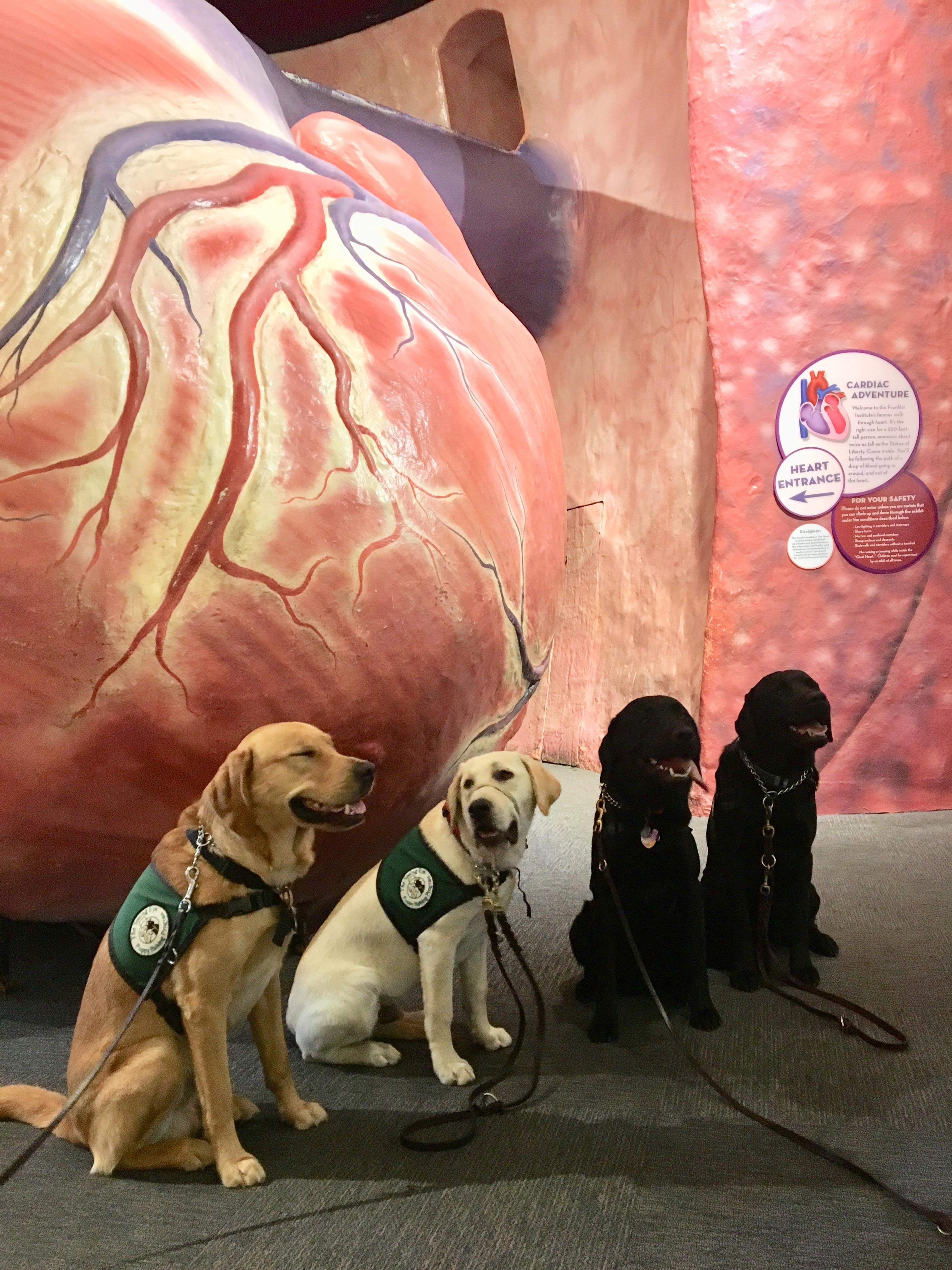 Dogs sitting in front of the Giant Heart