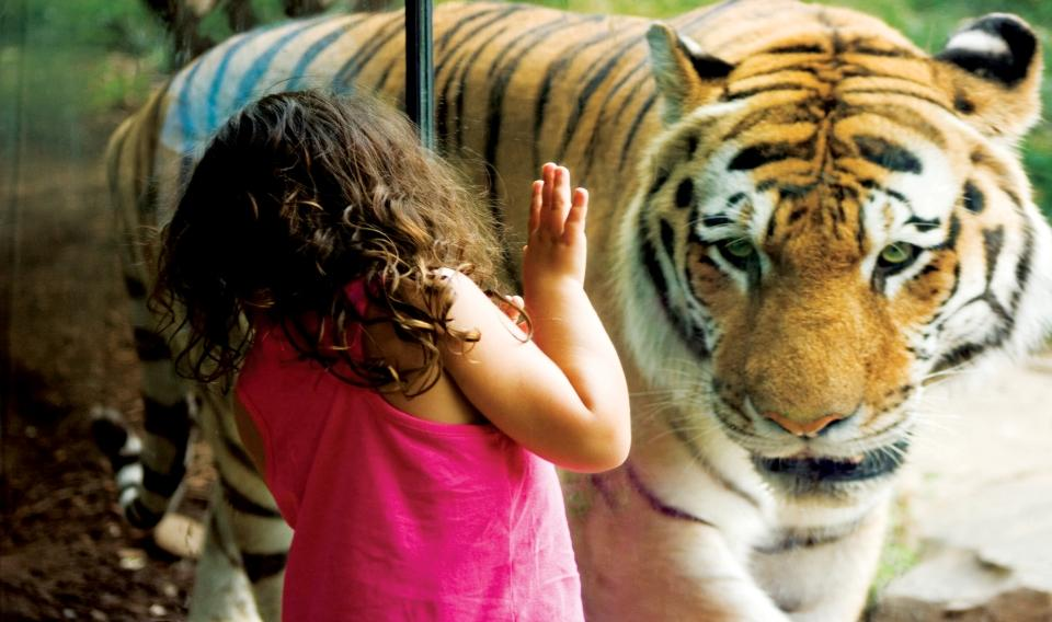 Be a Zoologist!