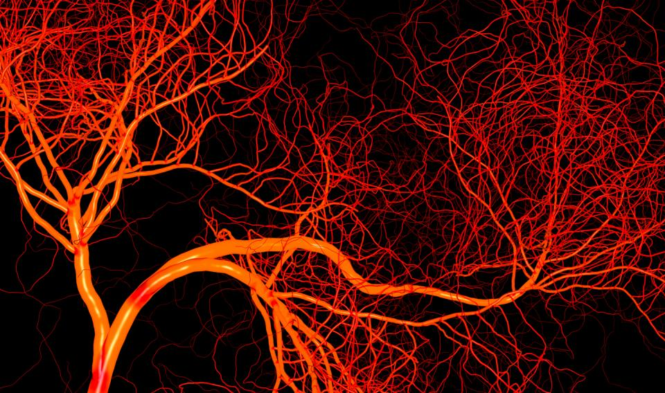 What are tiny blood vessels called?