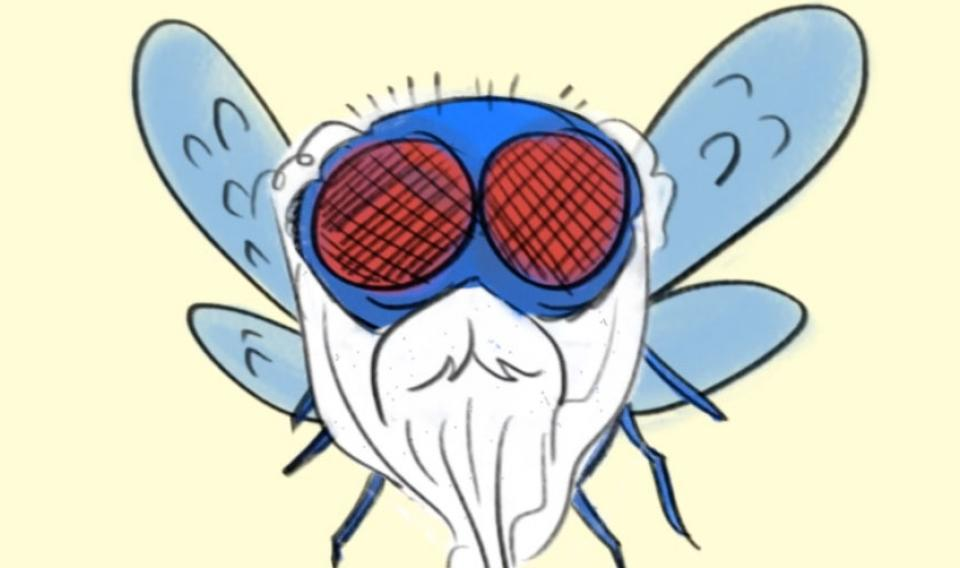 Illustration of a housefly with a long white beard