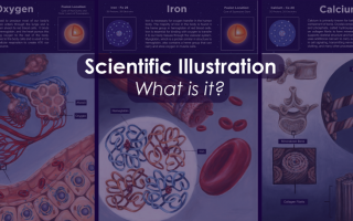 Blog Header image reading Scientific Illustration: What is it?