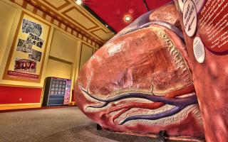 The Giant Heart at The Franklin Institute