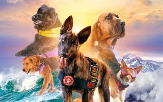 Image of dogs from the movie Superpower Dogs