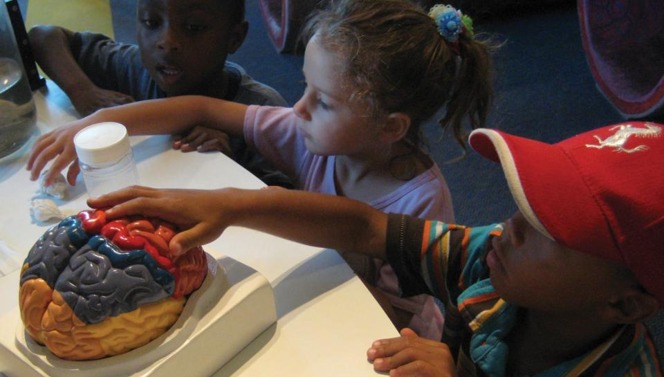 Discovery Camp Fun - Children learning about the brain