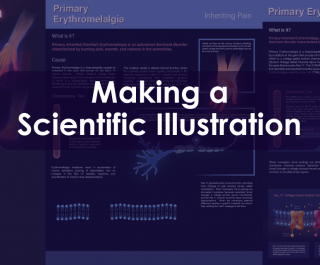 Blog Header image for Making a Scientific Illustration