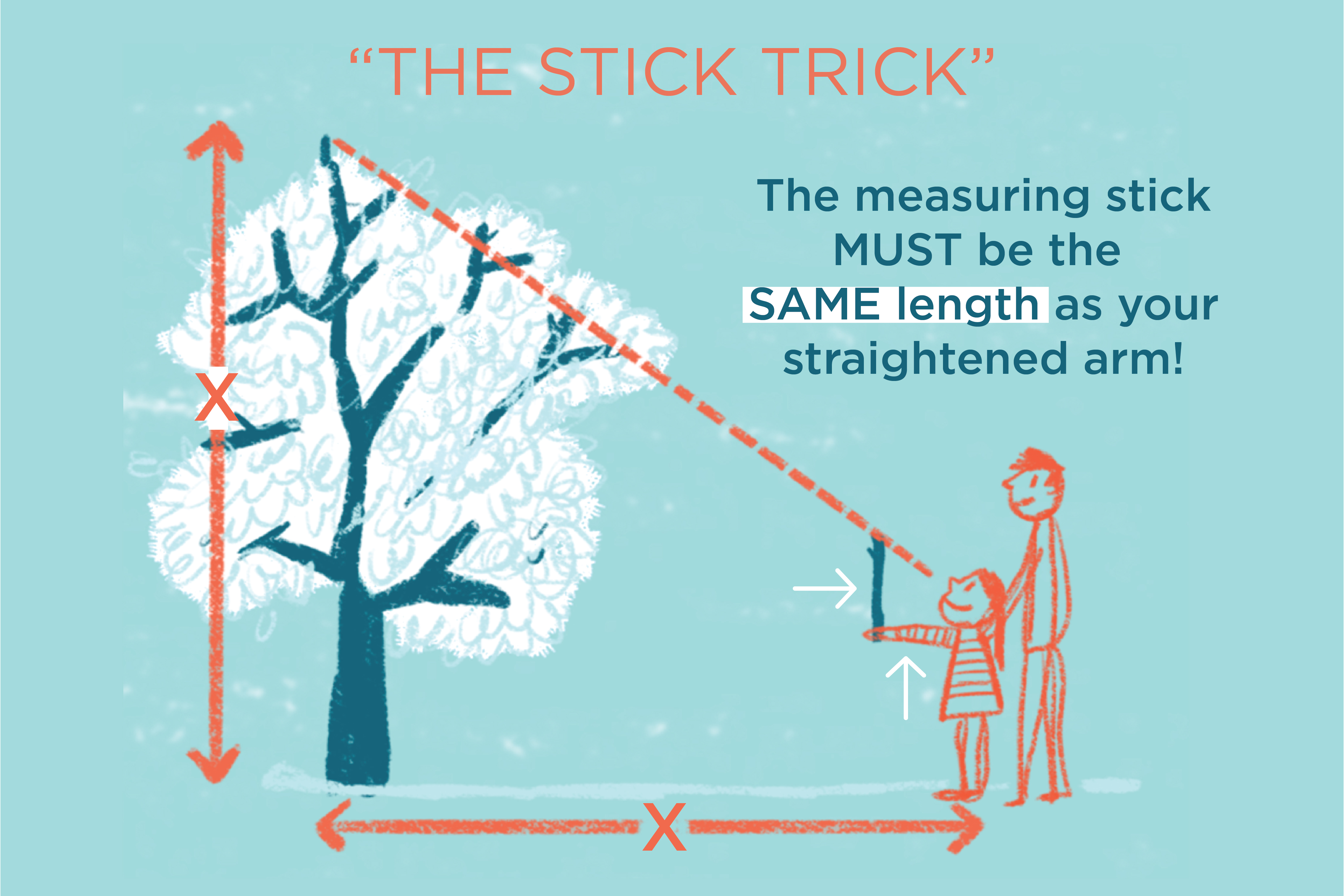 Diagram of a person using a stick to measure the height of a tall tree