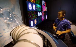 A child activates the model neuron interactive in the Your Brain exhibit at The Franklin Institute.