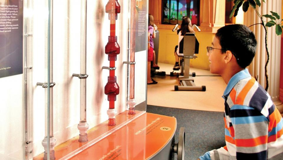 A boy learning how blood is pumped with valves in our heart in the Giant Heart Exhibit.